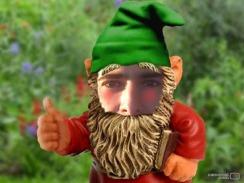 Auri Gnome