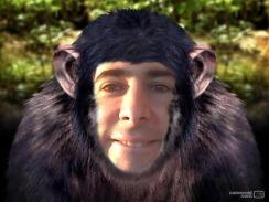 Auri Monkey